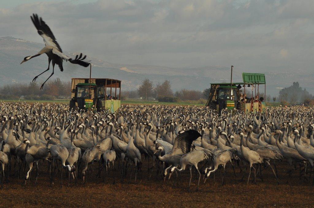 Safari Wagons during Winter Season