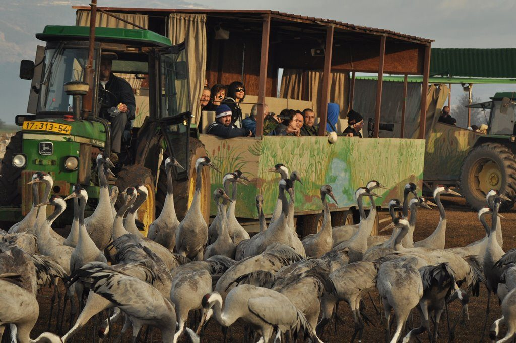 Safari Wagons during Winter Season